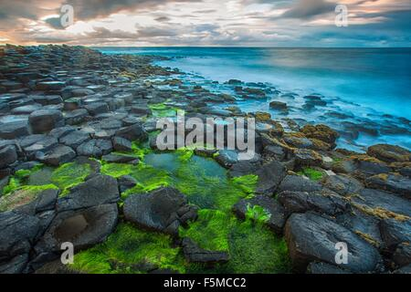 High angle view of moss covered Giants Causeway and blue ocean, Bushmills, County Antrim, Ireland, UK - Stock Photo