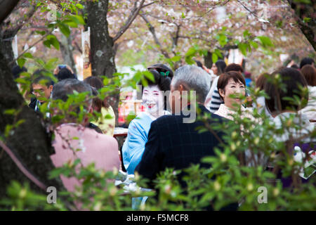 A geisha entertainment during a hanami at sakura (cherry blossom) season, Kyoto, Japan - Stock Photo