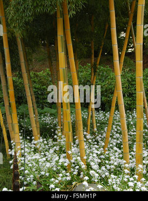 A bamboo forest in the East Gardens, Imperial Palace, Tokyo, Japan - Stock Photo