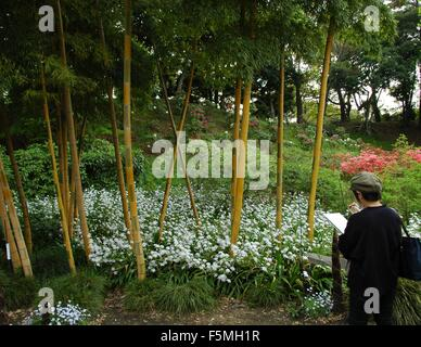 An artist sketches a bamboo forest in the East Gardens, Imperial Palace, Tokyo, Japan - Stock Photo