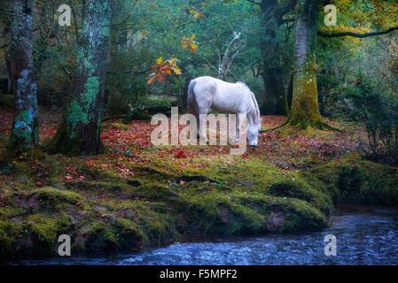 New Forest, Brockenhurst, Hampshire, England, UK - Stock Photo