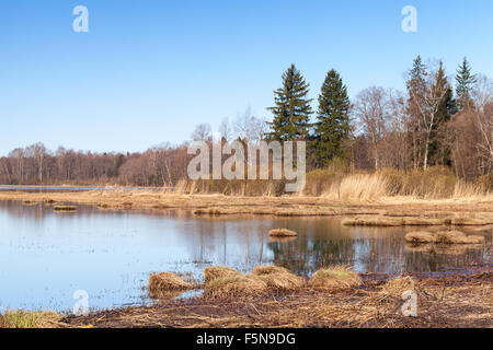 Coastal landscape of Saimaa lake in autumn. Dry grass and still water under clear blue sky - Stock Photo