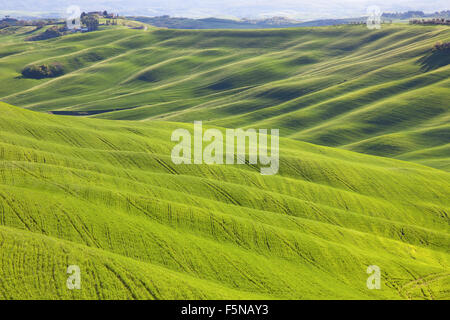 Tuscany, undulating terrain in Crete Senesi country landscape, Italy, Europe. Rolling Hills, green fields with sunlight - Stock Photo