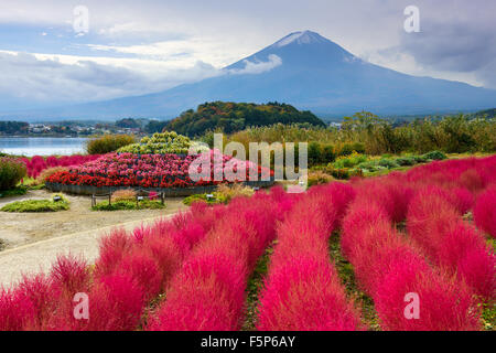 Fuji Mountain, Japan with kokia bushes at Oishi Park. - Stock Photo