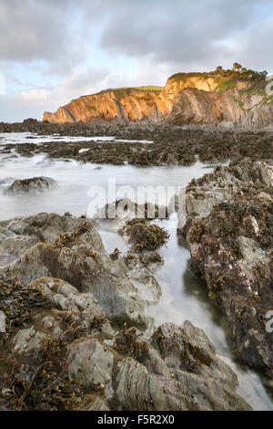 Seaweed on the rocks at Lee Devon, at low tide at sunset. - Stock Photo