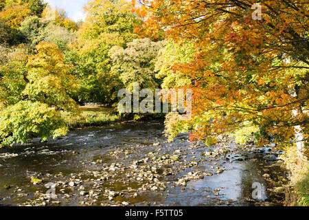 Autumnal colours in 'Strid Wood' (1), Bolton Abbey, Yorkshire Dales National Park, England, UK - Stock Photo
