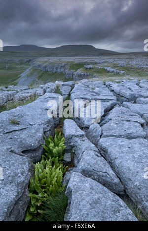 View towards the eastern slope of Ingleborough, from Moughton Scar, Crummackdale, Yorkshire Dales, North Yorkshire, - Stock Photo