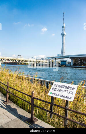 Biotope, near Tobu Line Sumida River bridge,Sumida river,Tokyo,Japan - Stock Photo
