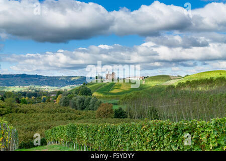 autumn colors in the wineyard - Stock Photo