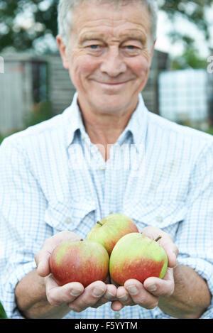 Senior Man On Allotment Holding Freshly Picked Apples - Stock Photo