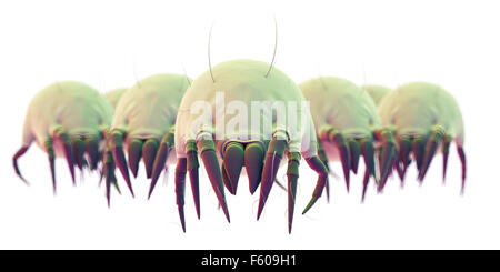 medically accurate illustration of some common dust mites - Stock Photo
