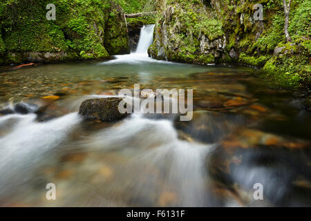 Stream, waterfall in rainforest, Tierra del Fuego National Park, Argentina - Stock Photo