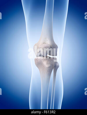 medically accurate illustration of the human skeleton - the knee - Stock Photo