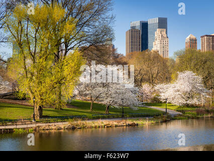 Central Park in Springtime, Blooming Yoshino Cherry Trees, Manhattan Upper West Side, New York City - Stock Photo