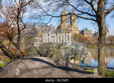 Central Park Lake with blooming Yoshino Cherry Trees in Spring, Manhattan Upper West Side, New Tork City - Stock Photo