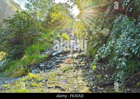 afternoon sun rays shining through the trees whilst exploring New Zealand - Stock Photo