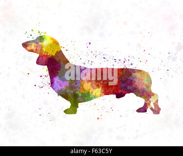 Dachshund in watercolor - Stock Photo
