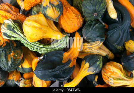 A variety of smaller squashes, Vermont USA - Stock Photo