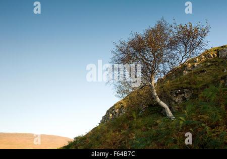 Tree in Autumn in the Fairy Glen on the Isle Of Skye. - Stock Photo