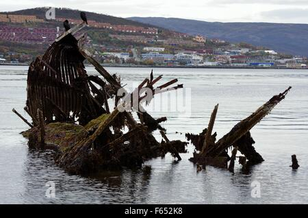 beautiful big black cormorant birds sitting on a old wooden ship wreck in cold fjord - Stock Photo