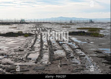 Tire tracks in the sand, leading to an eel trap set up in the St Lawrence river near Kamouraska, province of Quebec. - Stock Photo