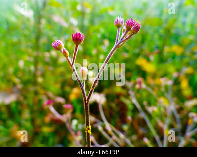 Fresh Small Purple Flowers on Field - Stock Photo