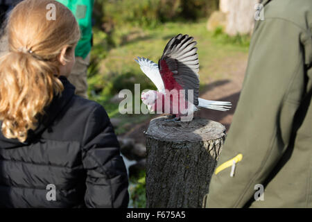 A girl looking at a parrot - Stock Photo