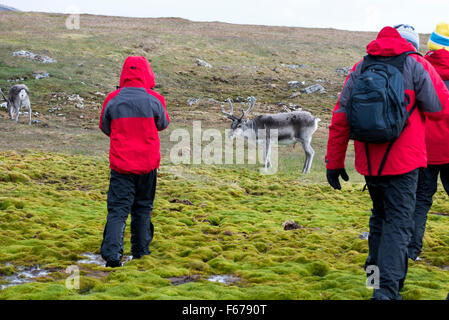 Norway, Svalbard, Spitsbergen, Trygghamna Fjord, Alkhornet on the northern side of the mouth of Isfjord. Spitsbergen - Stock Photo