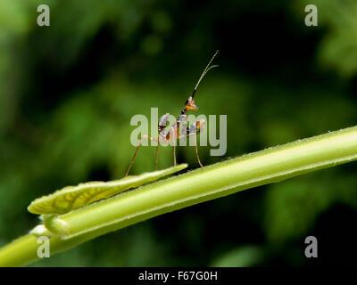 mantis - Stock Photo