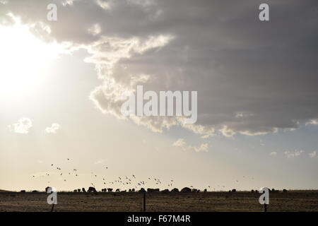The sun shines over a flock of birds and some sheep. Clouds are beginning to cover the sun, and rays of light are - Stock Photo