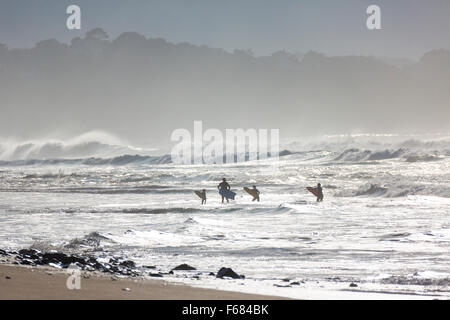A family having a go at bodyboarding on the beach of Bidart, in the late afternoon (Pyrenees Atlantiques - Basque - Stock Photo