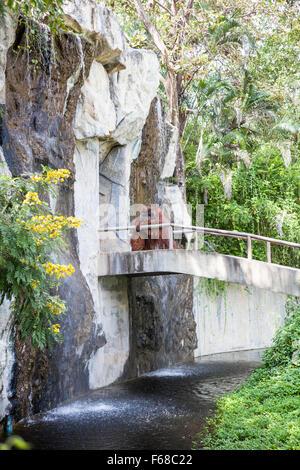 on an concrete walkway is an orangutan - Stock Photo