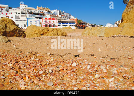 Seashells on a sandy beach with a village in the background. - Stock Photo