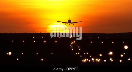 Dusk flying - Stock Photo