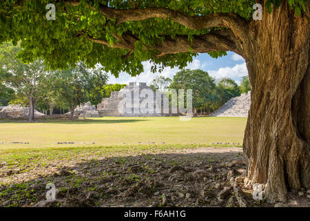 Tree frames plaza and pyramids at the Mayan ruins of Edzna in Campeche, Mexico. - Stock Photo