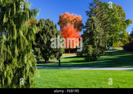 Isolated tree in autumn with red and orange foliage. Filter effect for added drama. - Stock Photo
