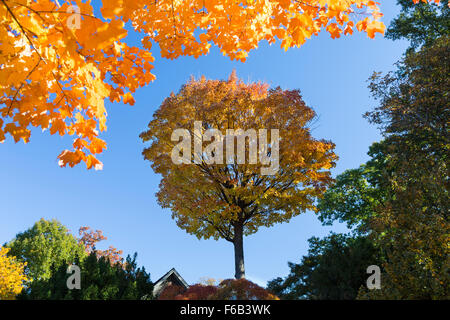Isolated trees in shadow framed with yellow autumn leaves at the top - Stock Photo