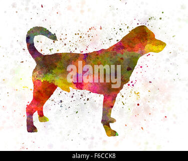 Danish swedish farmdog 01 in watercolor - Stock Photo