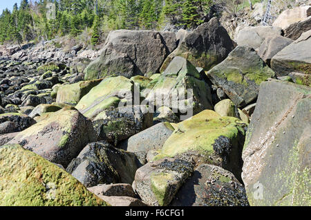 Boulders covered in marine alga (prob. Ulothrix laetevirens) at low tide, early spring, Otter Cove, Acadia National - Stock Photo