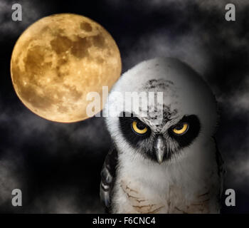 Close up of Owl and Full Moon, Halloween Night Theme. - Stock Photo