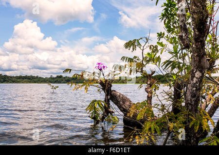 Cuyabeno Wildlife Reserve, Is An Important Nature Reserve In Amazonia, Water  Trees - Stock Photo