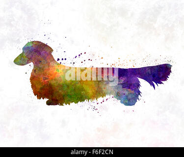 Dachshund Long Haired in watercolor - Stock Photo