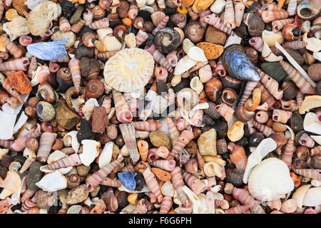 Close-up of lots of tiny colourful shells on a beach. - Stock Photo