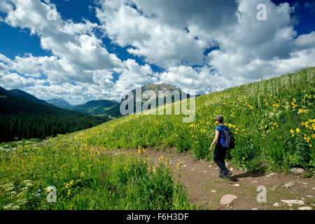 Wildflowers, hiker on Trail No. 401 and Gothic Mountain (12,631 ft.), Gunnison National Forest, near Crested Butte, - Stock Photo