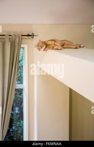 Cat resting on a high exposed beam in a house in Issaquah, Washington, USA - Stock Photo