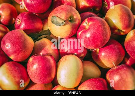 Fresh Apples In Bushel - Stock Photo