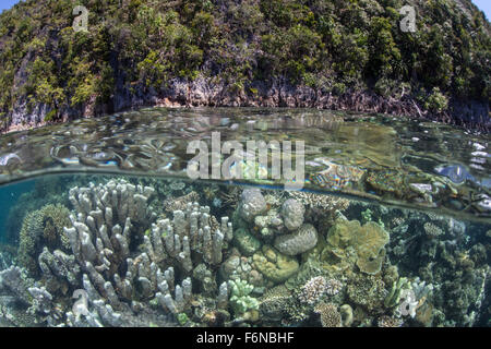 A healthy and diverse coral reef grows near limestone islands in Raja Ampat, Indonesia. This remote region is known - Stock Photo