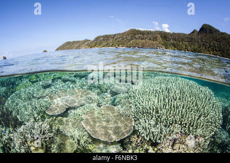 A beautiful coral reef grows near a set of limestone islands in Raja Ampat, Indonesia. This remote, equatorial region - Stock Photo