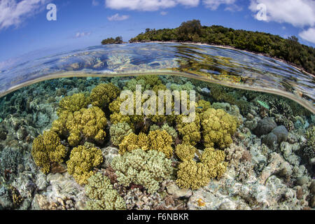 Soft corals grow on a shallow reef flat on the edge of Palau's barrier reef. This Micronesian destination is popular - Stock Photo