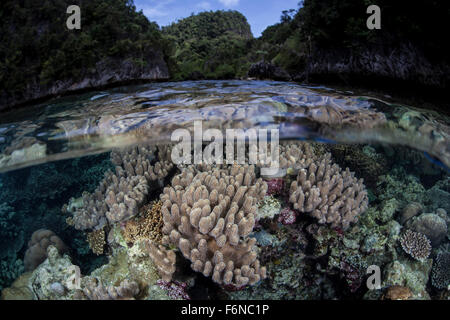 A set of soft corals grows in the shallow waters of Raja Ampat, Indonesia. This beautiful region is known for its - Stock Photo